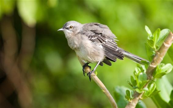 Papéis de Parede Sparrow em uma filial