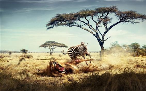 Papéis de Parede A zebra batalha leão, imagem criativa