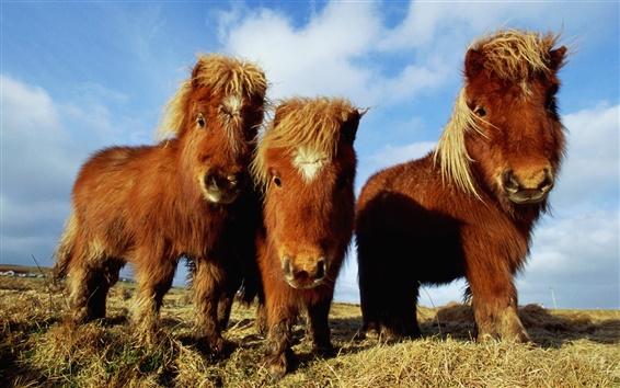 Fondos de pantalla Tres marrón caballo