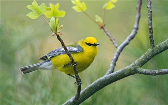 黄色いシジュウカラ