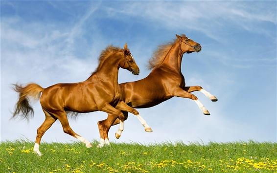 Обои Две лошади