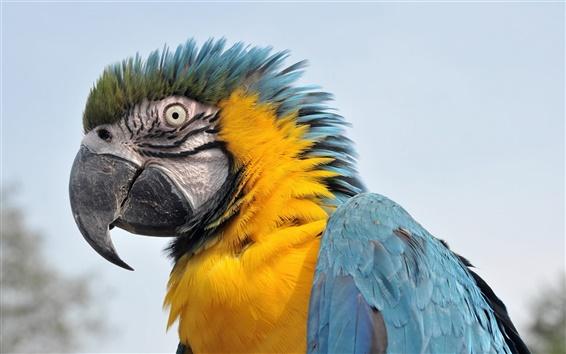 Wallpaper Vigilance of parrots