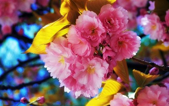 Fond d'écran Belles fleurs de printemps fleurissent