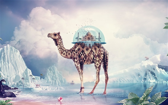 Wallpaper Creative pictures, camel India Paradise