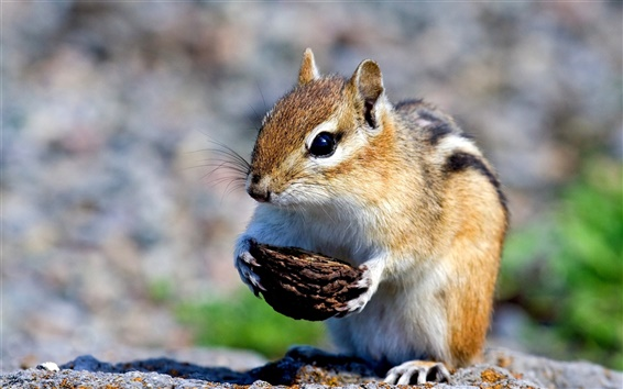 Papéis de Parede Esquilo pequeno bonito