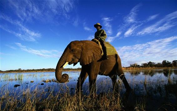 Обои Слон водно-болотных угодий