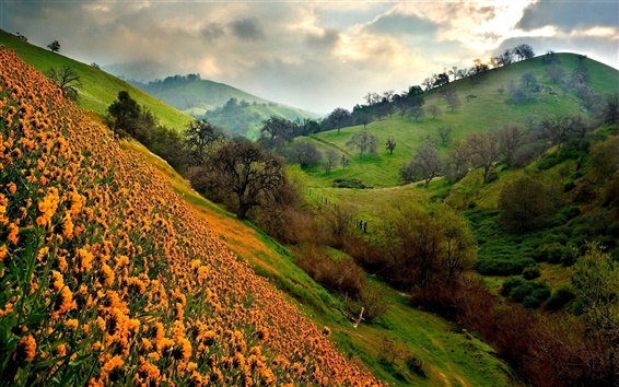 Wallpaper Green hills and orange flowers