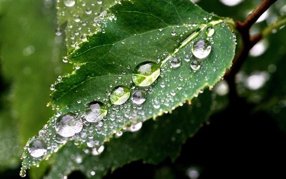Wallpaper Green leafy raindrops macro