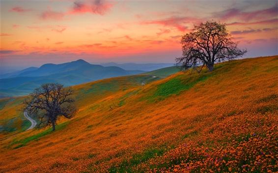 Обои Холмы покрыты дикими цветами