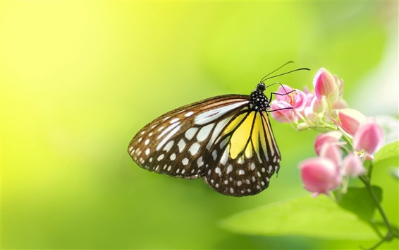 Wallpaper Insect butterfly flowers
