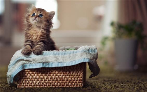 Fond d'écran Petit chat dans le panier