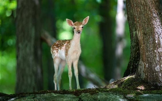 Wallpaper Lonely deer