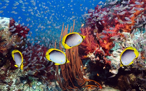 Wallpaper Marine tropical fish