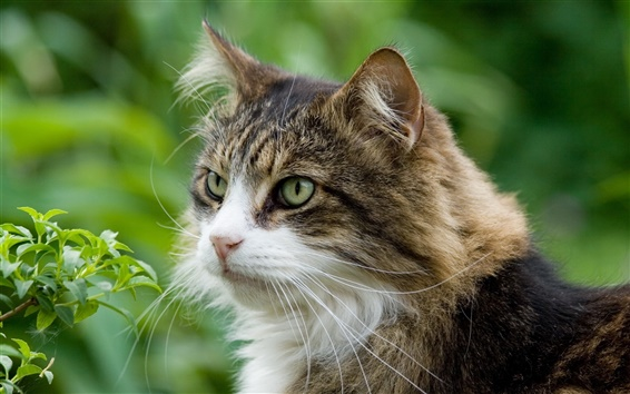 Обои Открытый кошка крупным планом
