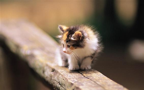 Fond d'écran Scared chaton