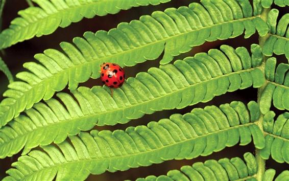Wallpaper Spring green leaves ladybug