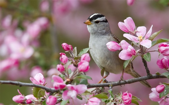 Wallpaper Spring peach blossom and the birds