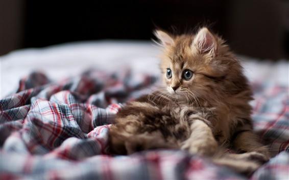 Fondos de pantalla La curiosidad de un gato pequeño