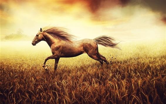Fond d'écran Le cheval court dans un champ de maïs