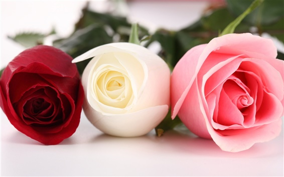 Wallpaper Three different colors of roses
