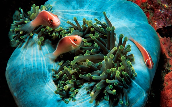 Papéis de Parede Peixes tropicais e corais verde