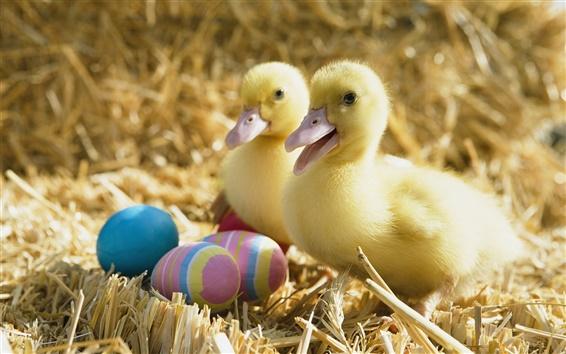 Hintergrundbilder Zwei kleine Enten und Ostereier