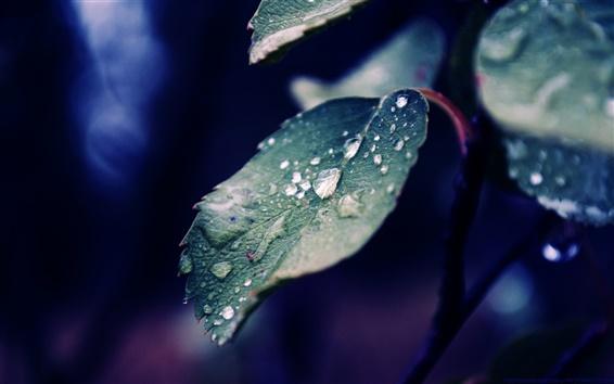 Wallpaper Water drops on a leaf