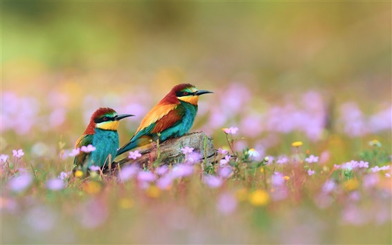 Wallpaper Wildflowers beautiful kingfisher