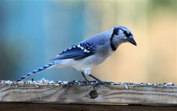 Wallpaper A blue bird close-up