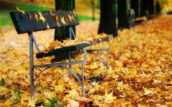 Wallpaper Autumn leaves bench in the park