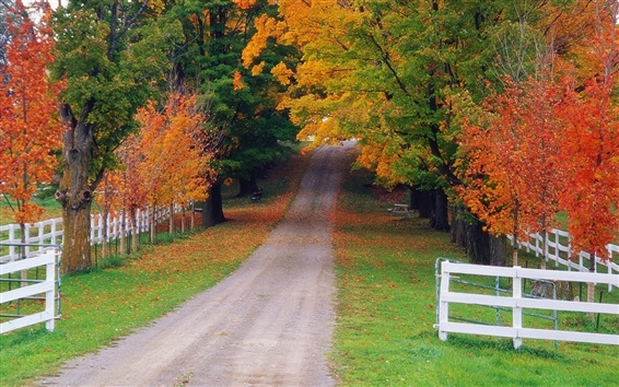 Wallpaper Autumn maple forest road