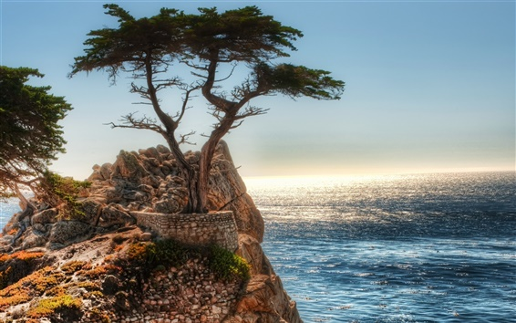 Wallpaper Coast rock cliff tree