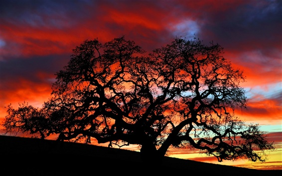 Wallpaper Dusk under the tree silhouette beauty