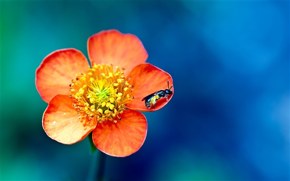 Wallpaper Flowers and insects wasp macro photography