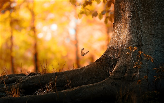 Обои Бабочки лес лето