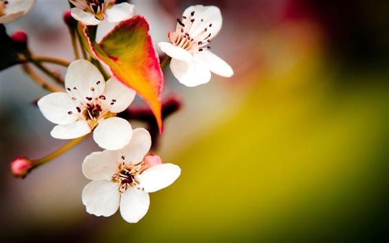 Wallpaper Fruit trees blossom macro