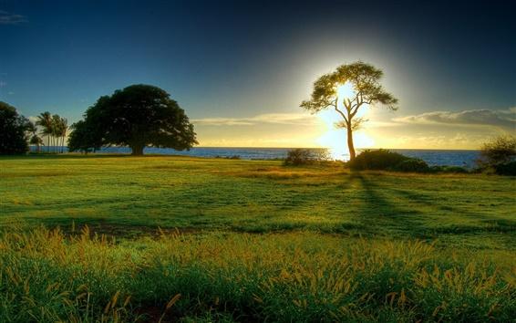Wallpaper Grasslands sunrise