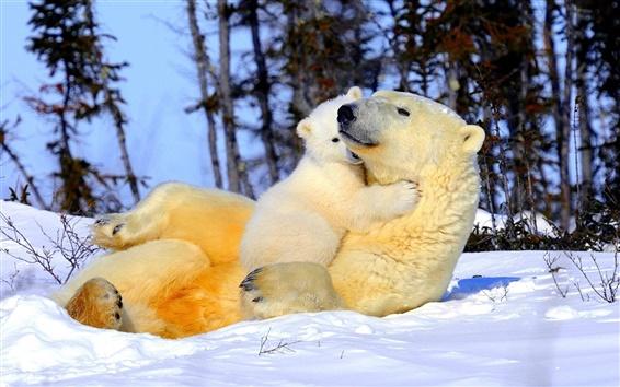 Fond d'écran Bonne ours polaire