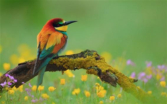 Hintergrundbilder Kingfisher Wildblumen Totholz
