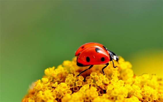 Wallpaper Ladybug yellow flowers