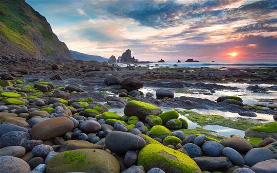 Fondos de pantalla Moss piedra playa sol se levanta