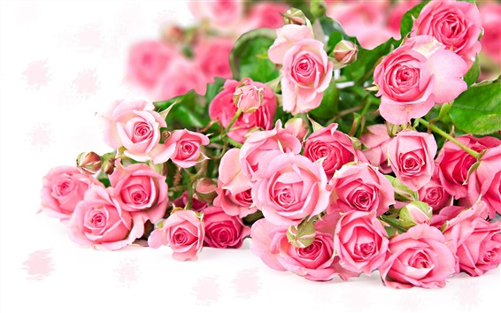 Wallpaper Pink rose flower bouquet, romantic color