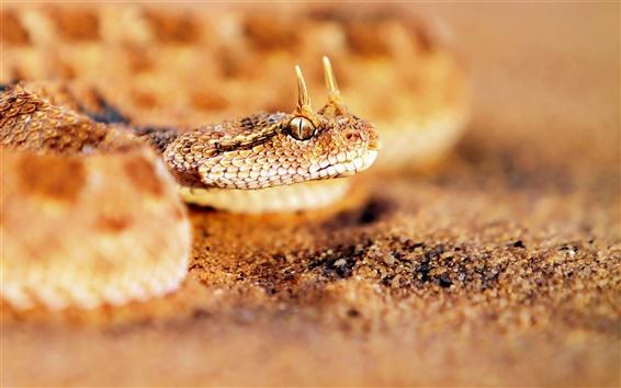 Обои Змея крупным планом на песке