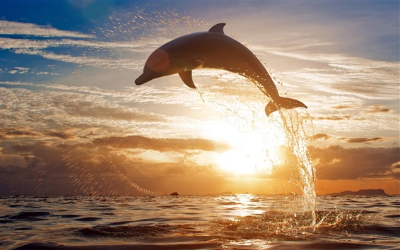 Обои Брызг морской волны дельфины прыгают на закате