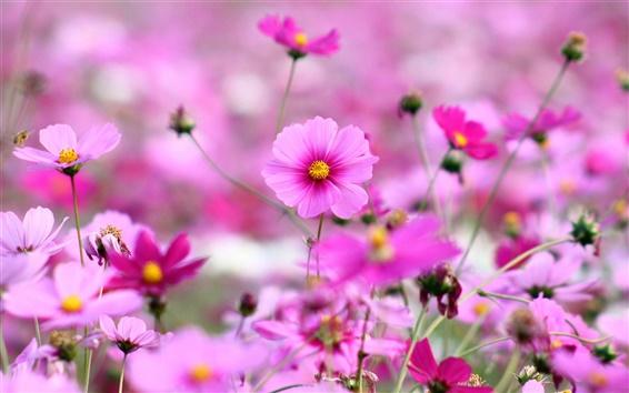 Wallpaper Spring-blooming pink flowers
