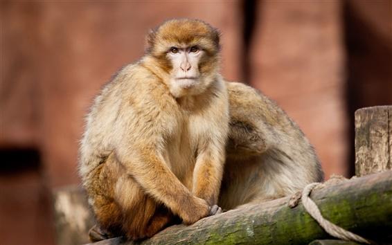 Обои Макросъемки от обезьяны