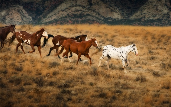 Wallpaper The horses in the grasslands