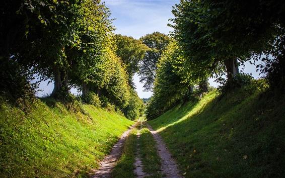 Обои Летом натурального дерева дороге