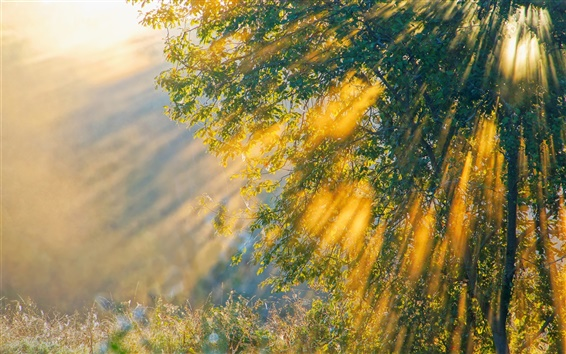 Wallpaper The sunshine of the morning, nature, trees