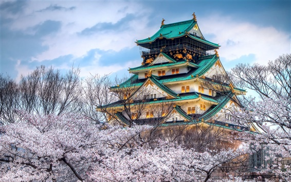 Wallpaper The temple of the cherry blossom season in Japan